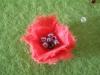 маково червено-04