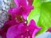 моята луда лятна любов с Мокамбили-010